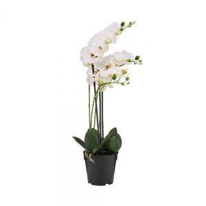 FLORISTA - ορχιδέα σε κασπό, 60cm λευκή
