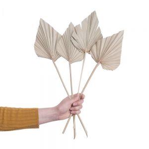 FLOWER MARKET - φύλλο φοίνικα, φυσικό